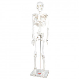 Boney Tony Skeleton